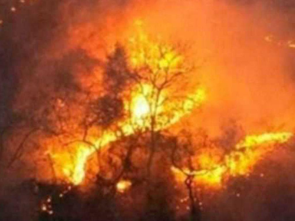 volume de queimadas no pantanal
